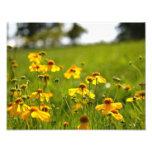 Flores Sunlit en un campo Foto