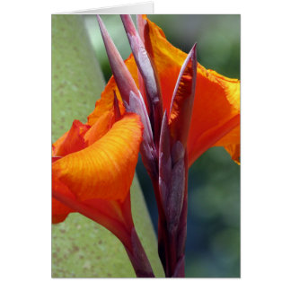 Flores Tarjeta