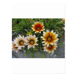 Flores Tarjeta Postal