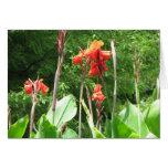 Flores Tarjeton