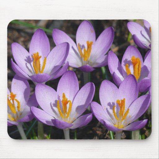 Flores tempranas de la primavera de las azafranes tapete de ratón