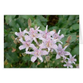 Flores Tom Wurl de Lilly del sapo Tarjeta De Felicitación