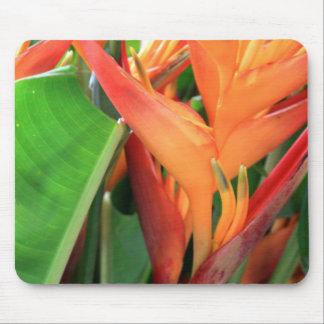 Flores tropicales brillantes de Heliconia Alfombrillas De Raton