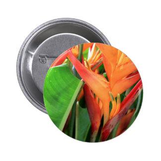 Flores tropicales brillantes de Heliconia Pins