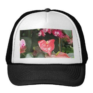 Flores tropicales de la orquídea gorras