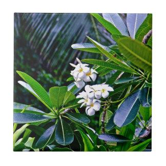 Flores tropicales del Plumeria Azulejo Cuadrado Pequeño