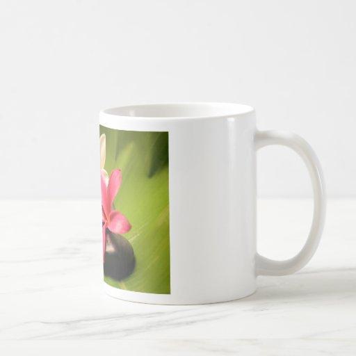 flores tropicales del plumeria en piedras taza de café