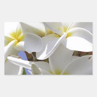 Flores tropicales del Plumeria Pegatina Rectangular