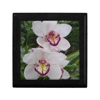 Flores tropicales elegantes de las orquídeas joyero cuadrado pequeño