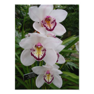 Flores tropicales hermosas de las orquídeas cojinete