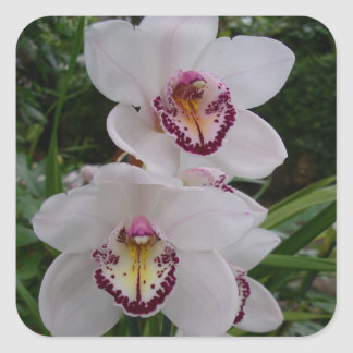 Flores tropicales hermosas de las orquídeas pegatina cuadrada