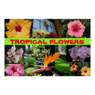 Flores tropicales posters