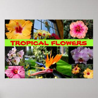 Flores tropicales póster