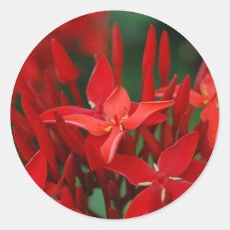 Flores tropicales rojas etiqueta redonda