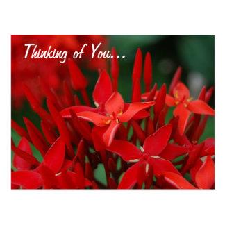 Flores tropicales rojas tarjetas postales