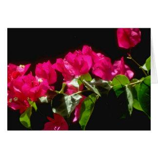 Flores tropicales rosadas, flores de Ocho Rios Tarjeta De Felicitación