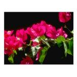 Flores tropicales rosadas, flores de Ocho Rios Postal