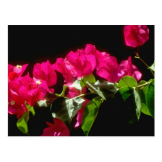 Flores tropicales rosadas, flores de Ocho Rios Tarjeta Postal