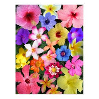 Flores tropicales tarjetas postales