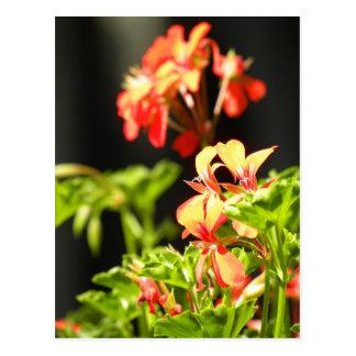 Flores ucranianas tarjeta postal