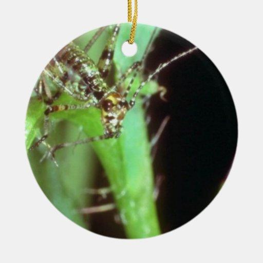 Flores verdes de la mosca de la flor adorno para reyes