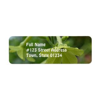 Flores verdes de la nicociana etiqueta de remite