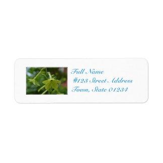 Flores verdes de la nicociana etiquetas de remite