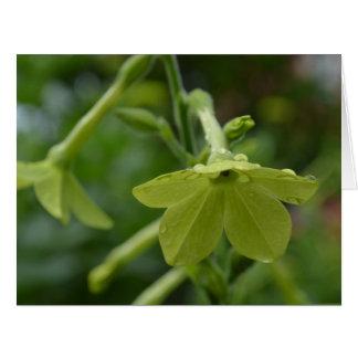 Flores verdes de la nicociana felicitación