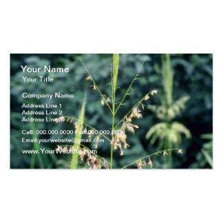 Flores verdes del arroz salvaje (zizania acuática) plantilla de tarjeta de negocio