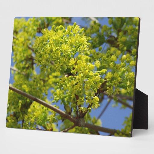 Flores verdes minúsculas placa de plastico