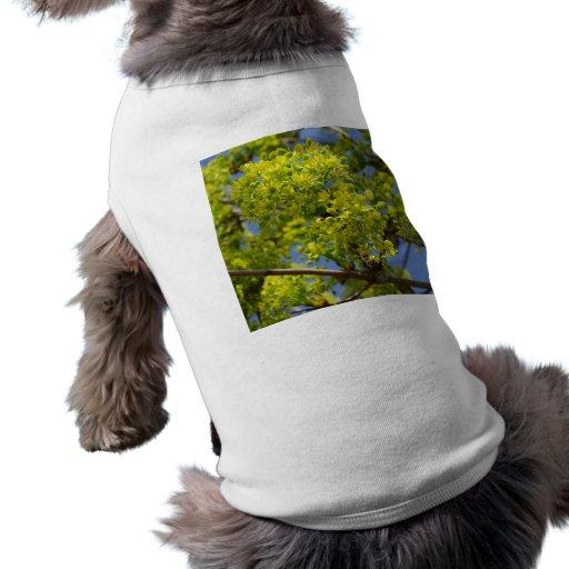 Flores verdes minúsculas ropa de mascota