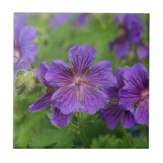 Flores violetas de Cranesbill Teja