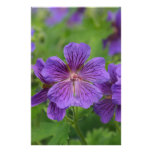 Flores violetas de Cranesbill Papeleria Personalizada