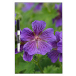 Flores violetas de Cranesbill Pizarra