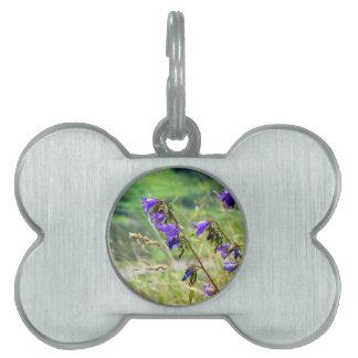 Flores violetas en el prado en el viento placas de nombre de mascota