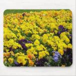 Flores violetas en Shangai China Alfombrillas De Raton