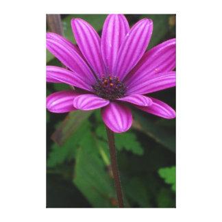 Flores violetas hermosas lona estirada galerías