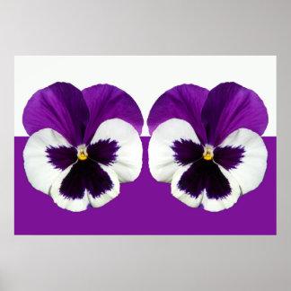 Flores violetas púrpuras del pensamiento póster