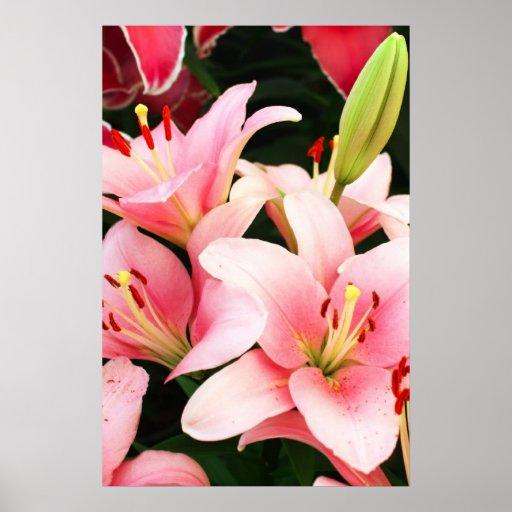 Flores y brote del lirio impresiones
