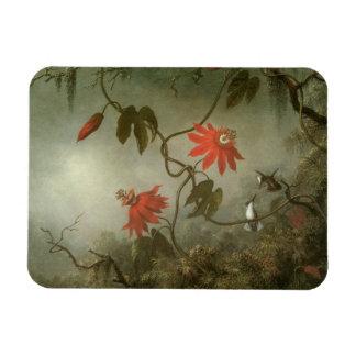 Flores y colibríes de la pasión de Martin J Heade Imanes