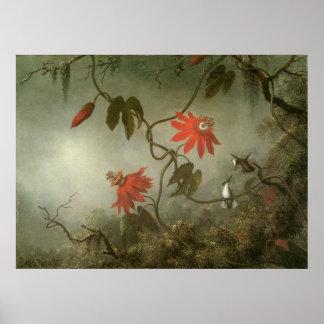 Flores y colibríes de la pasión de Martin J Heade Posters