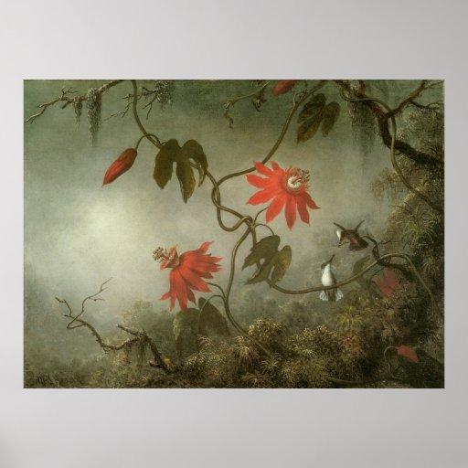 Flores y colibríes de la pasión de Martin J Heade Póster