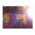 Flores y luz tarjeta postal