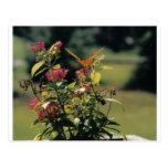 Flores y mariposa anaranjada postales