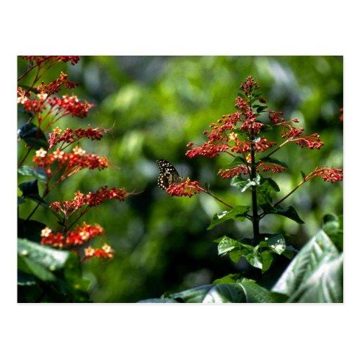 Flores y mariposas en Franche Comte 2 Postales