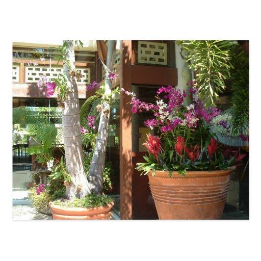 Flores y palmas postales