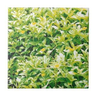 Flores y plantas del verano azulejo cuadrado pequeño