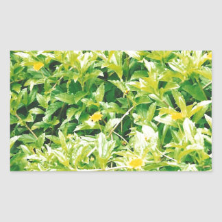 Flores y plantas del verano pegatina rectangular