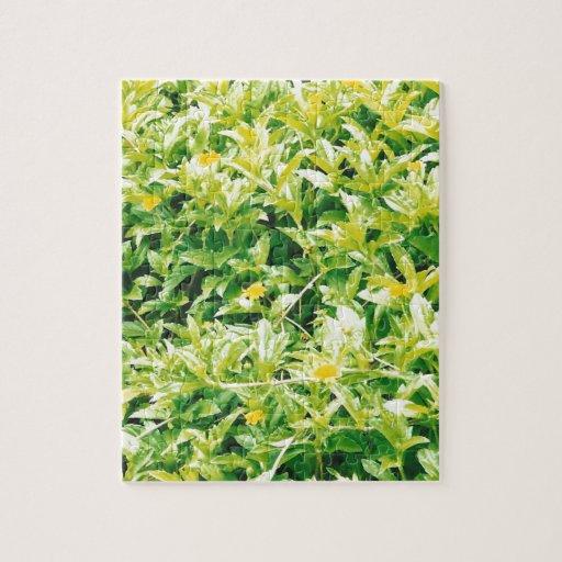 Flores y plantas del verano puzzle con fotos