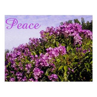 Flores y postal de la paz
